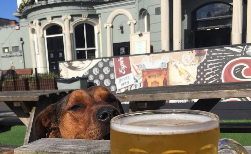 dog friendly liverpool